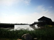 Shanghai's wetlands open for sightseeing and rejuvenation
